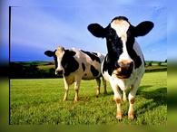 Бразилия экспортирует молоко в Россию