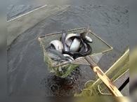 «Русское море» продает форелевый бизнес