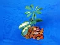 Одобрен «антиофшорный закон»