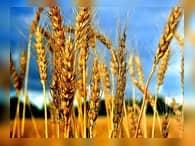 Закупочные цены на зерно останутся на прежнем уровне