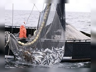 Япония ищет другие способы ловли в российской акватории