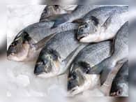 Российские рыбаки повезут рыбу в обход