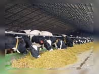 «Мираторг» наращивает объемы производства мяса КРС