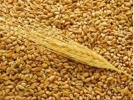 Запасы зерна в России сократились на 30%