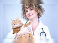 Бизнес-идея ветеринарной клиники