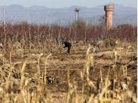 Китай будет развивать сельские регионы в 2013 году
