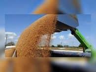 Часть собранного в России рекордного урожая оказалась под угрозой