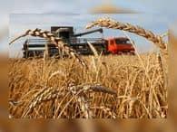 Египет намерен закупить в России еще 180 тысяч тонн пшеницы
