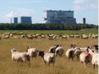 Британское правительство заявило о долгосрочной поддержке атомной энергетики