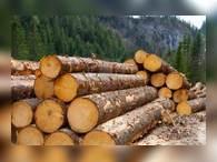 Красноярские лесопромышленники впервые за 8 лет работают безубыточно