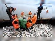 Для Приморья 2016 год стал рекордным в добыче рыбы и морепродуктов