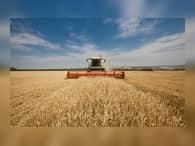 Приамурье готово поставлять зерно в Китай и другие страны АТР