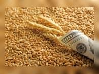 Россия должна платить 130% пошлины при экспорте пшеницы в Турцию