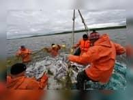 Добыча лосося на Камчатке увеличилась на 16,3%