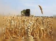 Повлияет ли рекордный урожай зерна на цену хлеба