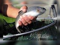 Холодильный комплекс на 40 тыс. тонн рыбы появится во Владивостоке