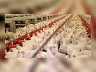 Производители из США готовы поставлять в Россию куриное мясо