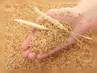 Россия вышла в мировые лидеры производителей и экспортеров зерна