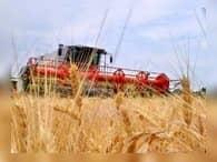 Экспорт российского зерна в Иран через Махачкалинский порт вырос на треть