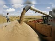 Аграрии Алтайского края преодолели отметку в пять миллионов тонн собранного зерна