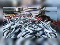 В рыбоперерабатывающую отрасль Владивостока инвестируют более 1 млрд руб