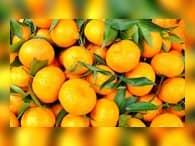 В России абхазские мандарины могут стать дефицитом