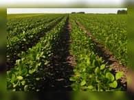 На Дальнем Востоке подведены итоги сельскохозяйственного года