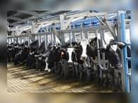 В Краснодарском крае планируют увеличить производство молока за три года на 21%