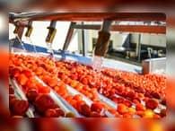 Астраханская область втрое нарастила объемы переработки овощей