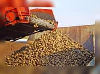 Наступит ли в России картофельный кризис?