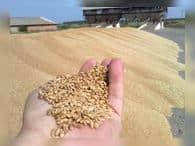 Урожай зерна-2018 будет не менее 100 млн тонн – Минсельхоз