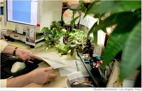 Какие цветы нужно держать в офисе?