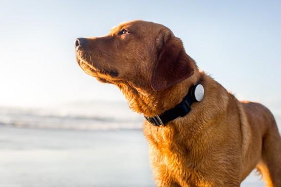 Датчик для слежения за собакой через смартфон