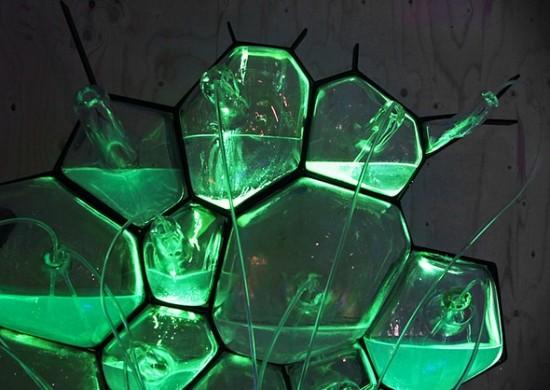 Электрические лампы, генерирующие свет благодаря бактериям