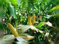 Продажи экспортного российского зерна превысили официальные прогнозы