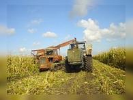 Правительство прогнозирует рост сельскохозяйственного производства